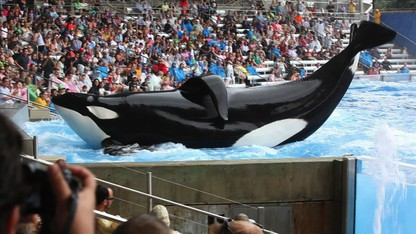 'Blackfish' opens at the Ross