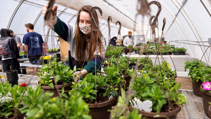 Horticulture Club to host spring bedding plant sale