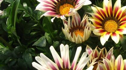Horticulture Club hosts spring plant sale April 23-25