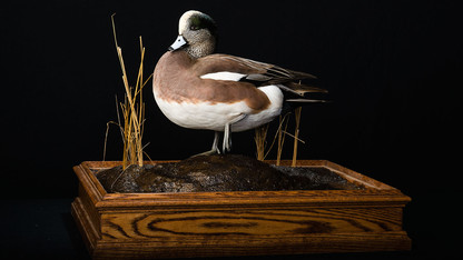 Spring bird migration celebrated March 7