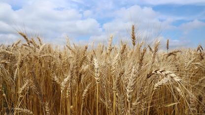 Extension Crop Production Clinics go virtual