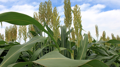 Agronomy and horticulture seminars begin Sept. 15