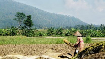 Seminar explores Indonesian food, environment challenges