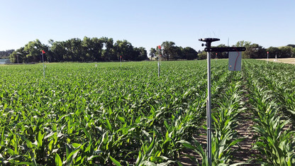 Researchers to tackle irrigation decision-making via USDA grant