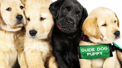 'Pick of the Litter' opens Dec. 14 at Ross