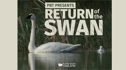 Return of the Swan