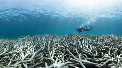 Fall documentary series continues with 'Chasing Coral'