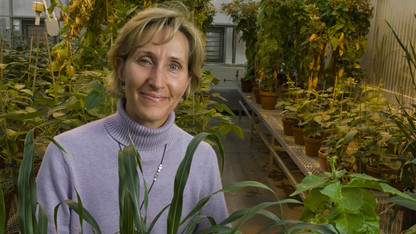 Gates grant to help Mackenzie advance research, aid African farmers