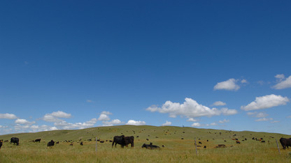 UNL helps launch website about climate change impacts on livestock