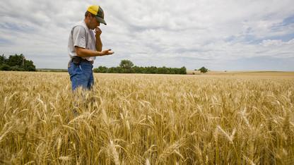 Forecast shows Nebraska farm income to drop sharply in 2015