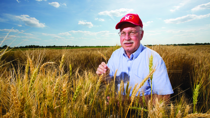 Husker Genetics releases new variety of wheat