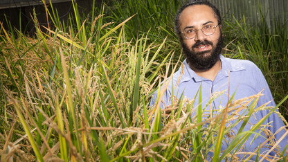 Research project seeks salt-tolerant rice genes