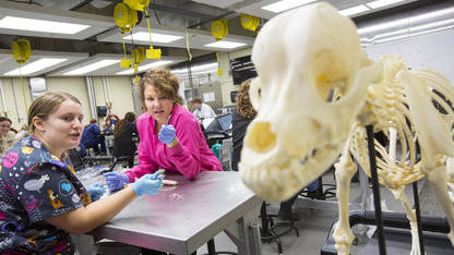 Veterinary Diagnostics Center groundbreaking is April 29