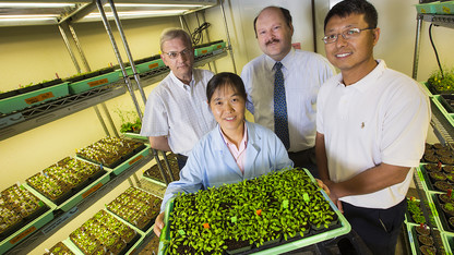 Study reveals mechanisms of plants' drought response