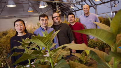 Researchers ID target of disease-causing plant pathogens