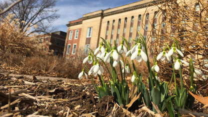 Is spring springing early in Nebraska?