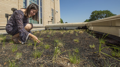 Student-led effort funds, establishes green roof