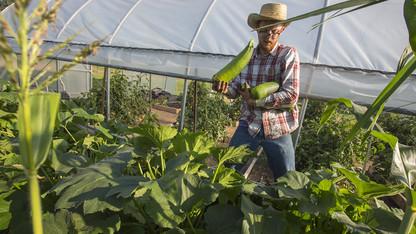 Leef, Green Fund help revive student-led organic garden