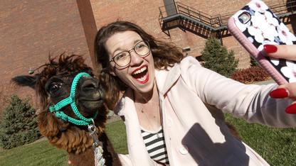 Alpaca visit inspires costume concepts