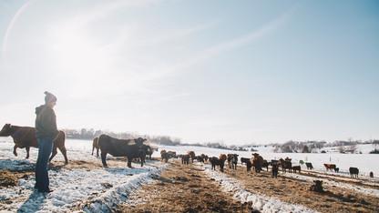 Campus experiences help Husker launch beef enterprise