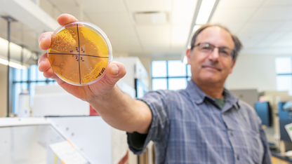 Husker-developed bacterium outperforms commercial probiotic
