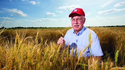 Study characterizes genetic resistance to wheat disease
