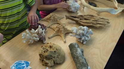 State Museum, Henry Doorly Zoo explore ocean life Jan. 18