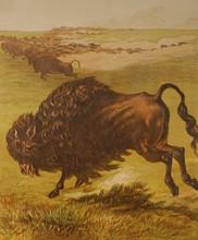 Great Plains exhibit features 19th-century engravings