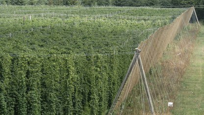 UNL offers free seminar on hops production