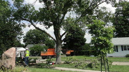 UNL experts offer advice on protecting ash trees
