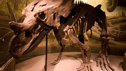 Morrill Hall to host Fossil Day celebration Oct. 6