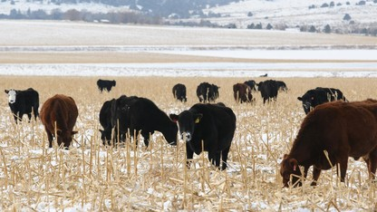 Nebraska State of Beef Conference is Nov. 2-3 in North Platte