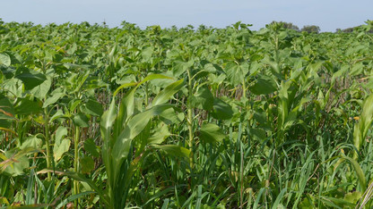 Registration open for Nebraska Cover Crop Conference