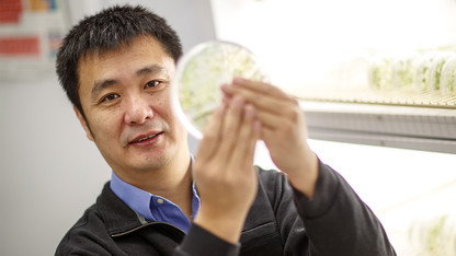 Discovery could bolster traits of soybeans, other crops