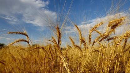 Nebraska part of national research initiative to improve cover crops