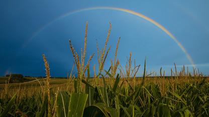 Nebraska Extension field crop scout training is May 10