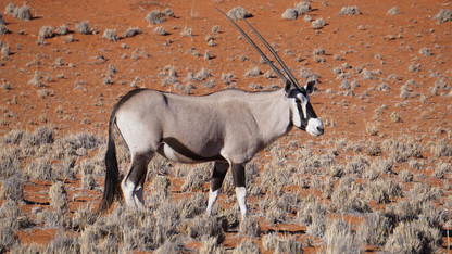 Great Plains Research focuses on ecotourism in Great Plains, Namibia