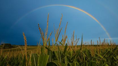 Poll: Despite strong ag ties, rural Nebraskans take downturn in stride
