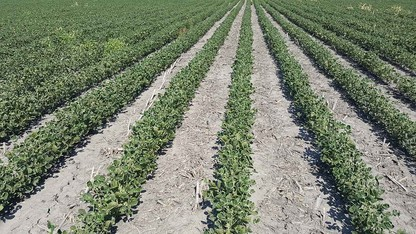 Nebraska Extension specialist responds to dicamba concerns