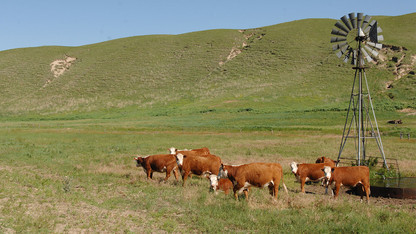 Grassland Studies series begins Aug. 28