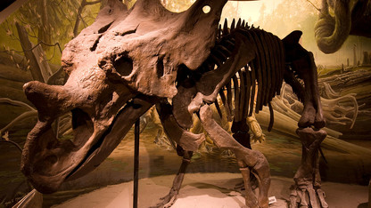 Morrill Hall to celebrate Fossil Day on Oct. 5