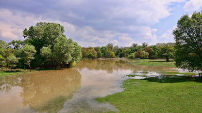 Extension offers real-time answers to flood-related lawn, landscape questions