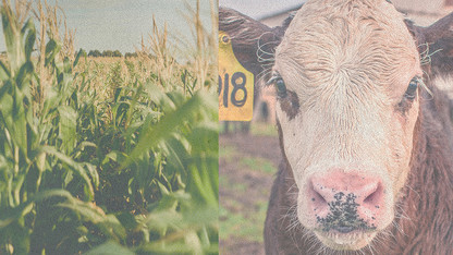 New crop, cow-calf budgets available for 2020