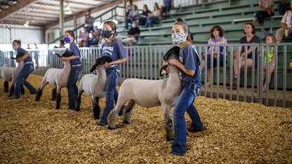 Fair organizers get creative to keep opportunities alive for 4-H, FFA youth