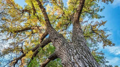 Nebraska Forest Service receives $2.6 million in federal funding