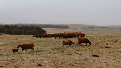 Extension webinar to focus on livestock risk management