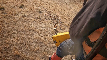Collaborative study tracks pronghorn in Panhandle