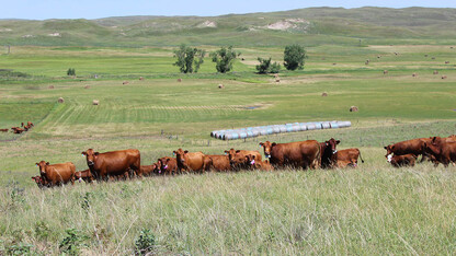 IANR receives funding for Western Rangeland Livestock Center