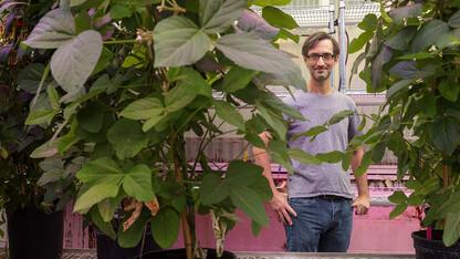 Husker scientist leads effort to understand, adapt legume nitrogen conversion