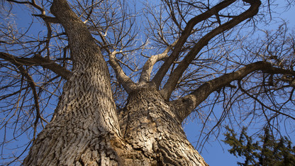 University outlines plan to protect ash trees